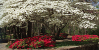 Bella Vista Gardens